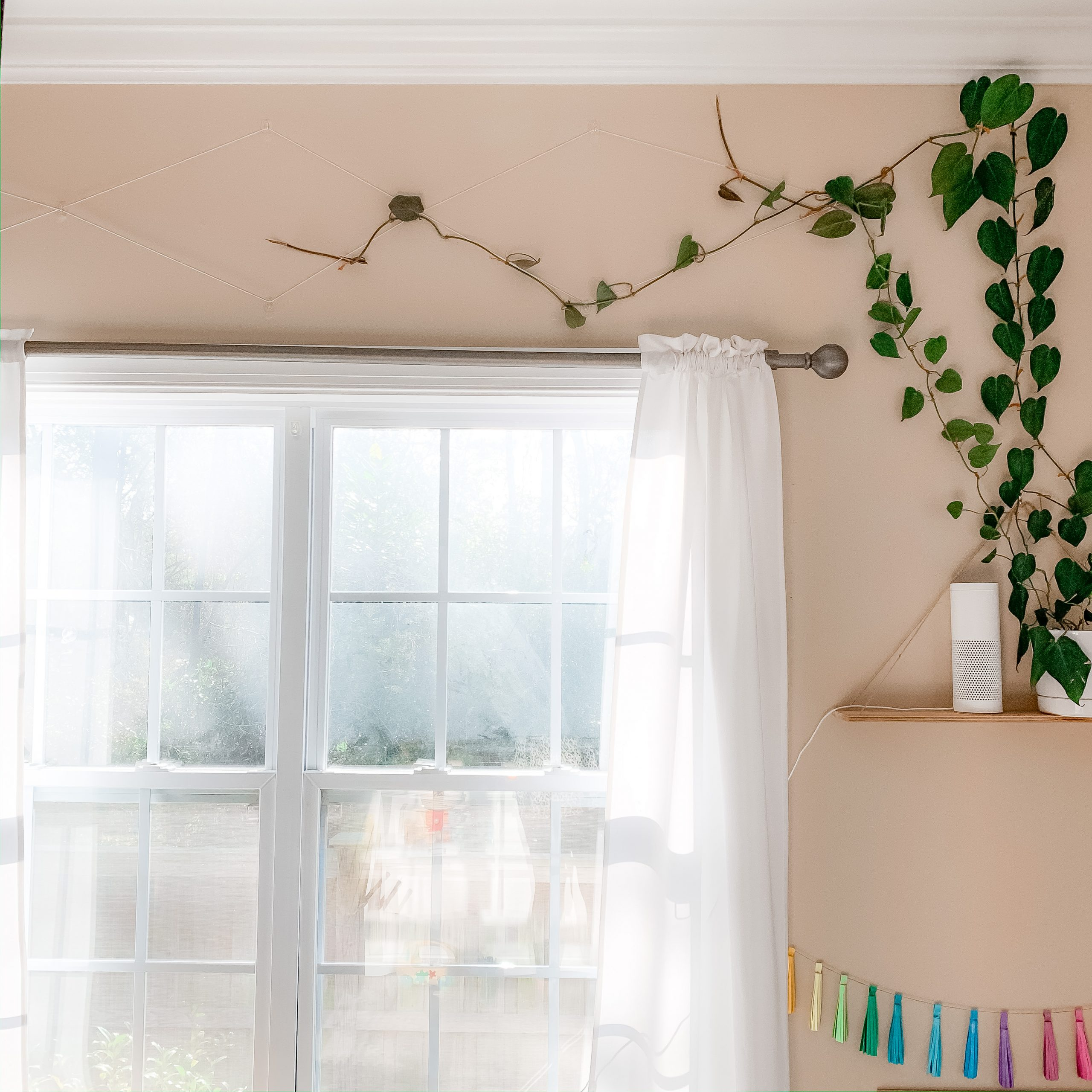 DIY Indoor Plant Trellis | Care for Your Indoor Vine Plant